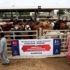 TürkiyeDiyanetVakfı, Pakistan'da 60 bin aileye kurban eti dağıtacak