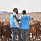 TDV, 10 bin 500 hisse kurbanı Moritanya'daki ihtiyaç sahiplerine ulaştıracak